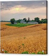 Fields Of Gold, Illinois Acrylic Print