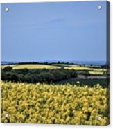 Fields Of Summer Acrylic Print
