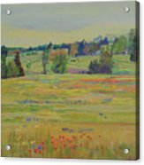 Fields Of Texas Wildflowers Acrylic Print
