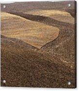 Fields Of Tuscany Acrylic Print