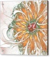 Fiery Chrysanthemum Acrylic Print