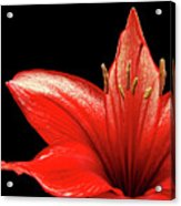 Fiery Red Acrylic Print