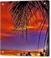 Fiery Sunset With Palm Tree Acrylic Print
