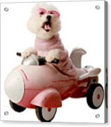 Fifi Is Ready For Take Off  Acrylic Print by Michael Ledray