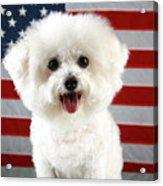 Fifi Loves America Acrylic Print by Michael Ledray