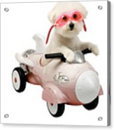 Fifi Loves Her Rocket Car Acrylic Print