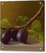 Figs From Walter's Orchard Acrylic Print