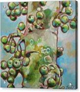 Figs3 Acrylic Print