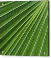 Fiji Fan Palm Acrylic Print