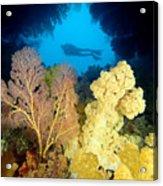Fiji Underwater Acrylic Print by Dave Fleetham - Printscapes