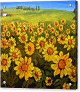 Filed Of Sunflowers Acrylic Print