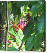 Filtered Red Acrylic Print