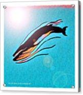 Finback Diving Through Krill Acrylic Print