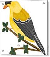 Finch In 2009 Acrylic Print