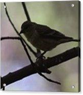 Finch Shadow 042814b Acrylic Print