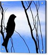 Finch Silhouette 1 Acrylic Print