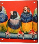Finches Acrylic Print