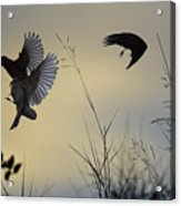 Finches Silhouette With Leaves 5 Acrylic Print