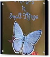 Find Joy In Small Things Acrylic Print