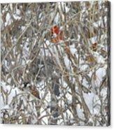 Find The Birds Acrylic Print