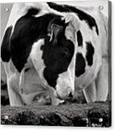Fine Art Black And White-189 Acrylic Print
