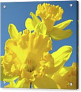 Fine Art Daffodils Floral Spring Flowers Art Prints Canvas Baslee Troutman Acrylic Print