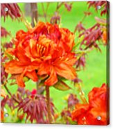 Fine Art Floral Art Prints Canvas Orange Rhodies Baslee Troutman Acrylic Print