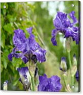 Fine Art Floral Prints Purple Iris Flowers Canvas Irises Baslee Troutman Acrylic Print
