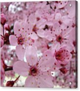 Fine Art Prints Spring Pink Blossoms Trees Canvas Baslee Troutman Acrylic Print