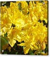 Fine Art Prints Yellow Rhodies Floral Garden Baslee Troutman Acrylic Print
