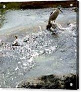 Fine Feathered Fisherman Acrylic Print