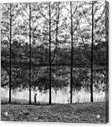 Fine Trees Acrylic Print