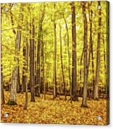 Fine Wine Cafe Golden Woods Acrylic Print