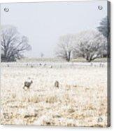 Fingal Winter Farmyard Acrylic Print
