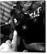 Finger Kiss Cat Acrylic Print