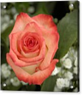 Fire And Ice Rose Acrylic Print