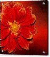 Fire Dahlia By Kaye Menner Acrylic Print