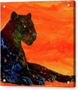 Fire Panther  Acrylic Print
