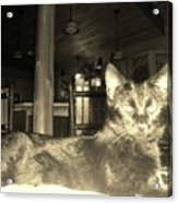 Firece Cat Acrylic Print