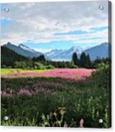 Fireweed At Mendenhall Glacier, Juneau, Ak Acrylic Print