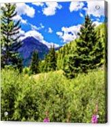 Fireweed, Deer Park Creek, Grand Turk Mountain Acrylic Print