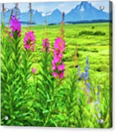 Fireweed In The Foreground 2 Acrylic Print