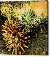 Fireworks 1 Acrylic Print