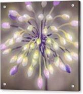 Fireworks  Wildflowers Acrylic Print