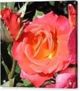 Firey Passion Rose Acrylic Print