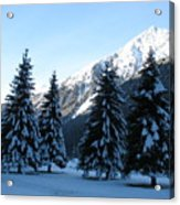 Firs In The Snow Acrylic Print