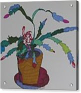 First Bloom Christmas Cactus Acrylic Print