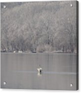First Day Of Spring Swan Lake Acrylic Print