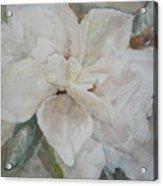 First Gardenia Acrylic Print by Dorothy Herron