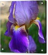 First Iris Acrylic Print